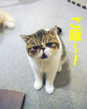 Yuzu6
